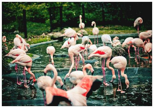 Фламинго в нюрнбергскомзоопарке