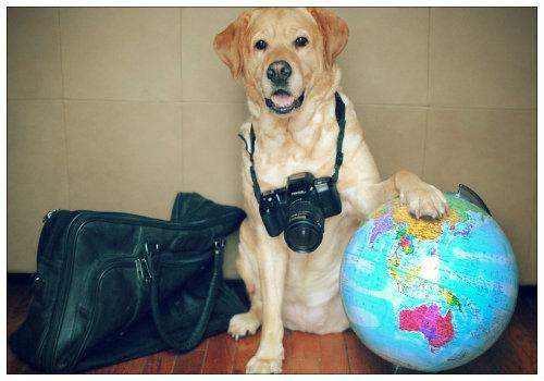 Собака с вещами.